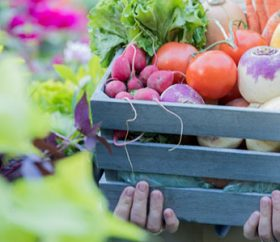 Unrecognizable woman holds a basket filled with fresh organic vegetables.